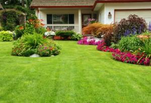 Beatiful Sod Lawn In The Portland Oregon Area
