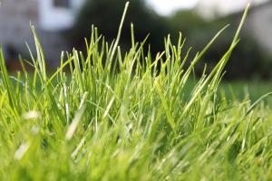 Sod Lawn Portland Oregon Example